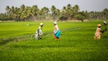 My TV : Agri meet today: Here's what is on the agenda